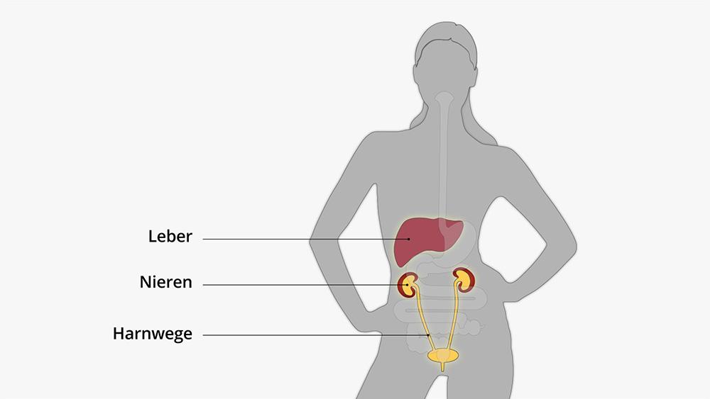 Eiweiß: Grundlagen und Stoffwechsel